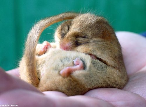 Image Result For Cute Baby Mice