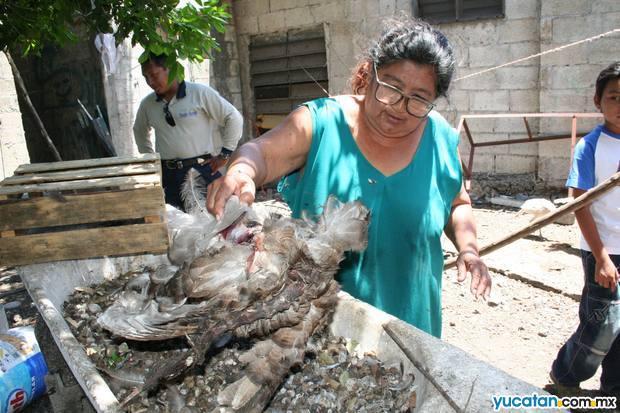 Cresce la paura a Motul Yucatan