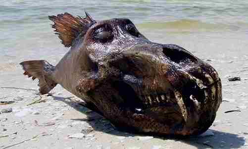 Cosa può essere questa strana creatura in spiaggia?