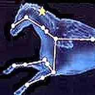 Pegaso ippogrifo grifone unicorno