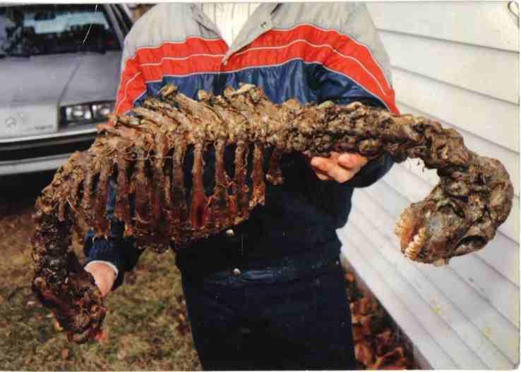Foto di uno scheletro misterioso ritrovato in Arkansas