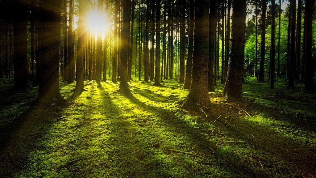 Chupacabra ripreso nella boscaglia