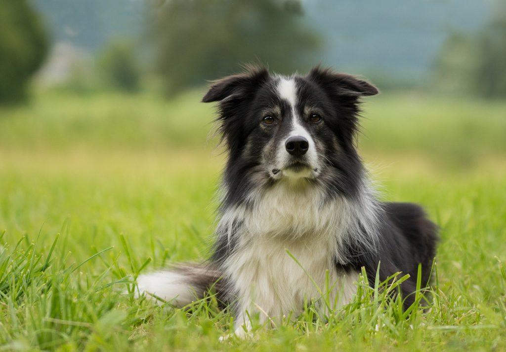 Un cane vegano