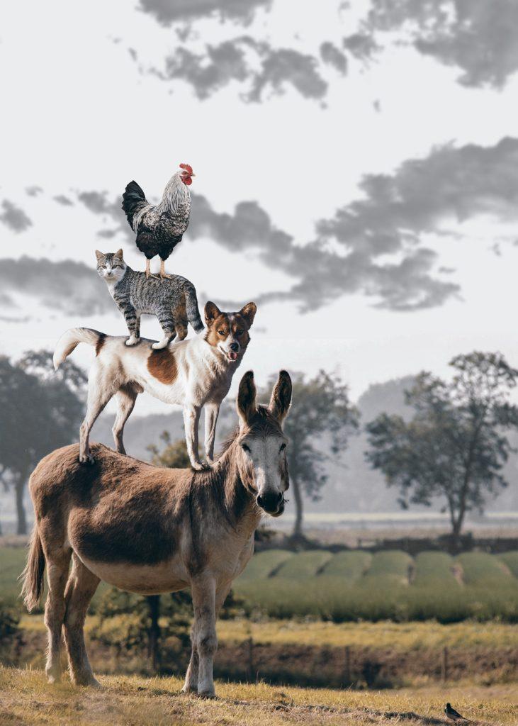 La Dichiarazione Universale dei Diritti dell'Animale